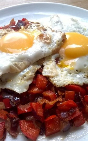 Kater-voedsel koolhydraten arm